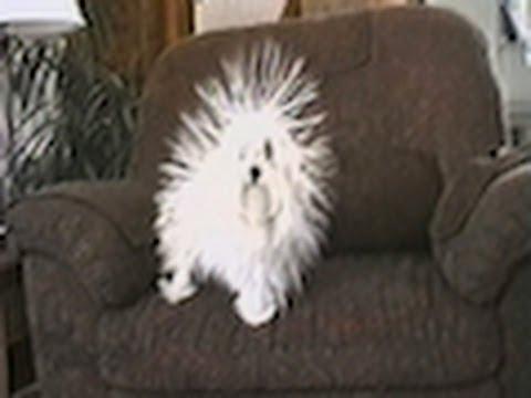 Static Dog!