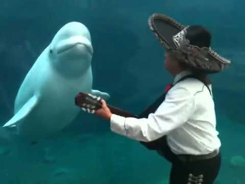 Mariachi-Band spielt für Beluga Wal