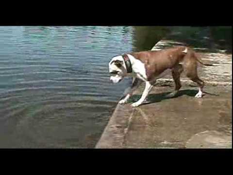 Hund holt riesigen Stein aus dem Wasser