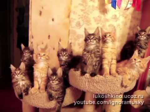Synchron-Katzen