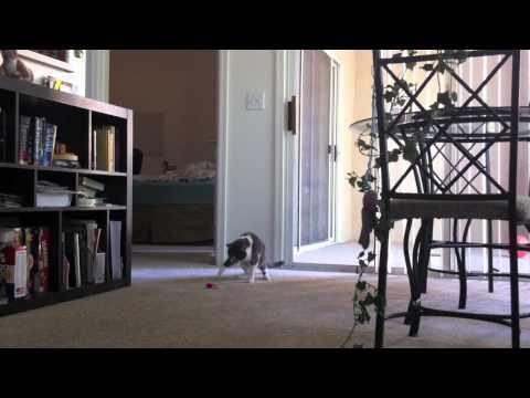 Spielzeugmaus erschreckt Katze