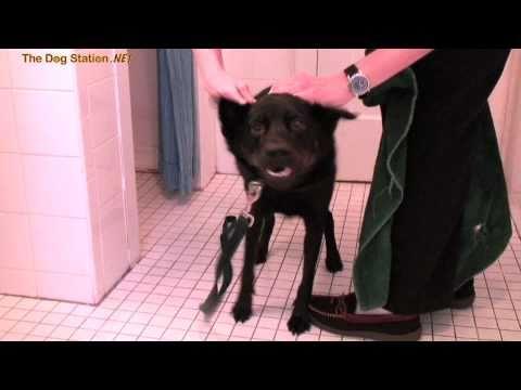 Hundetrockner mit 24 Drehungen pro Minute