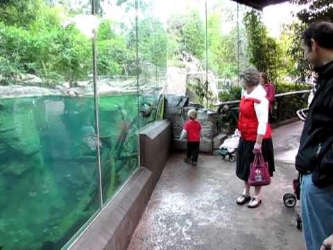 Rennen: Otter vs. Kind