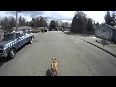 Moderner Hundeschlitten: Mit dem Skateboard Gassi fahren
