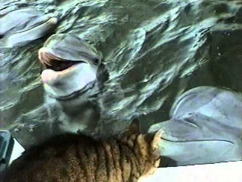 Katze trifft Delphine