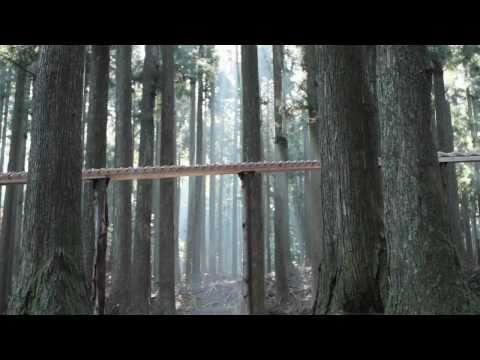 Die Xylophon-Waldstrecke