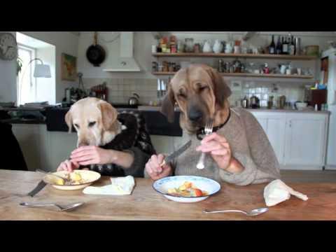 Zwei Hunde im Restaurant