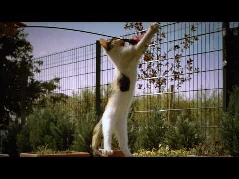 Super-Slowmotion-Katze