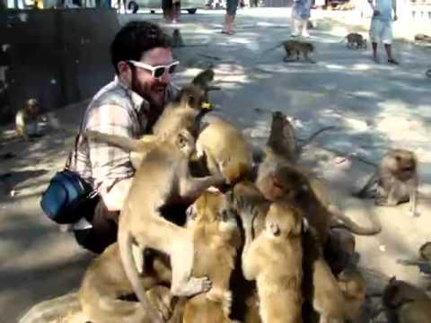 Ein Eimer Essen im Affengehege