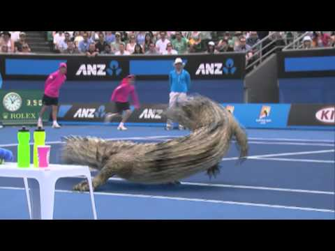 Krokodil-Tennis mit Hörnchen-Ball
