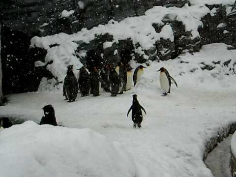 Der fröhliche Pinguin
