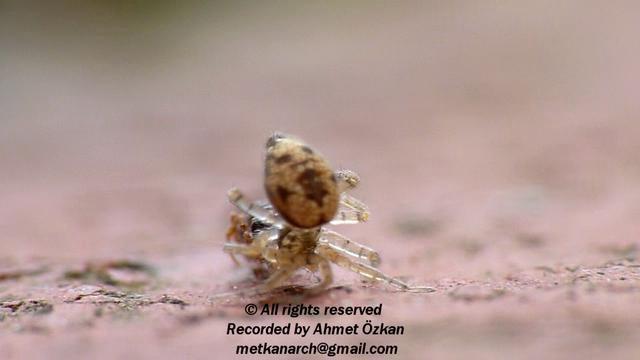 Spinne vs. Ameise