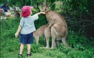 185-kangaroo1