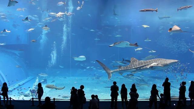 Mein neues Aquarium