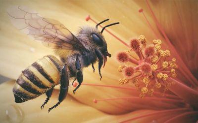 3D_Bee