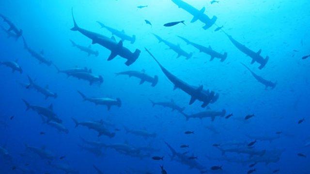 Tauchen bei den Galapagosinseln