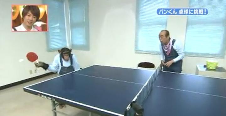 Affe spielt Tischtennis