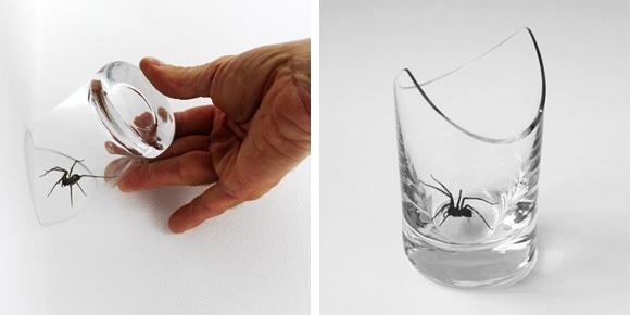 Das ideale Spinnenfangglas