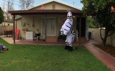 Dancin_zebra