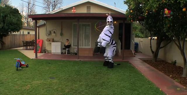 Das tanzende Zebra