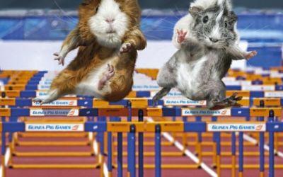 Guinea_Pig_Games_01