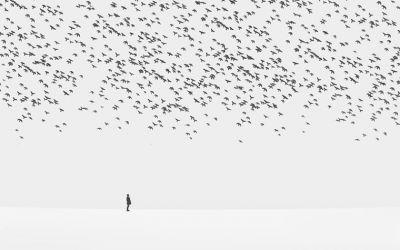 Hossein-Zare_01