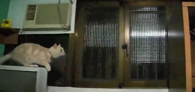 Cat Fail Compilation