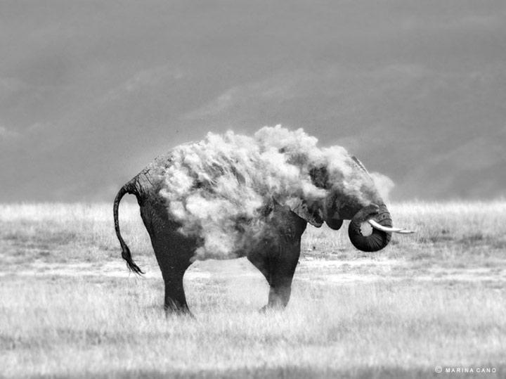 Wildnis-Fotografie von Marina Cano