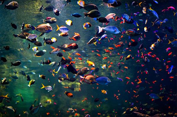Wunderschöne Fotografie: Navid Baraty