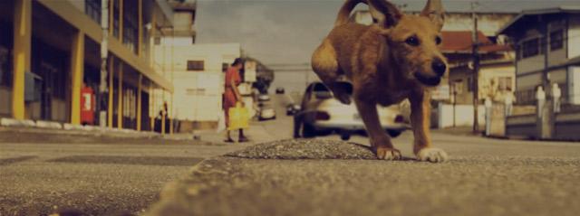 Die Abenteuer eines Straßenhundes