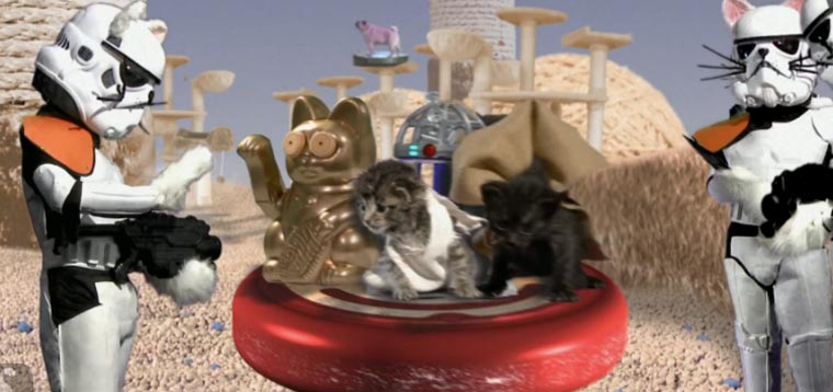 Star Wars with cute kittens
