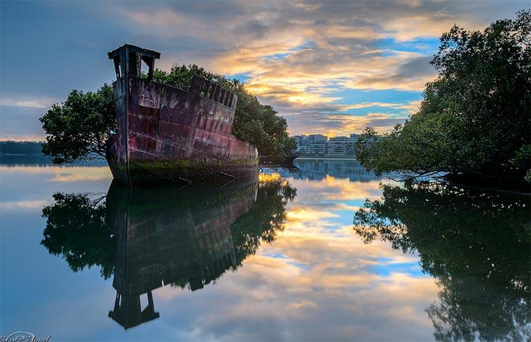102 Jahre altes Schiffswrack wird zum Wald