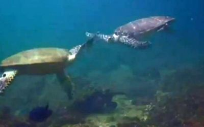 Turtle_highfive