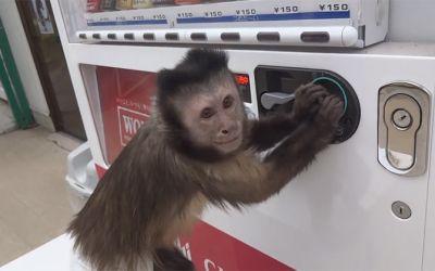 affenautomat