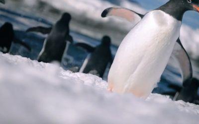 antarctica_talesofice