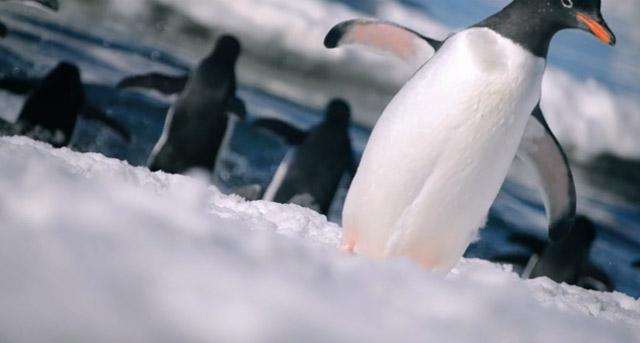 Das antarktische Eis. Und Pinguine.