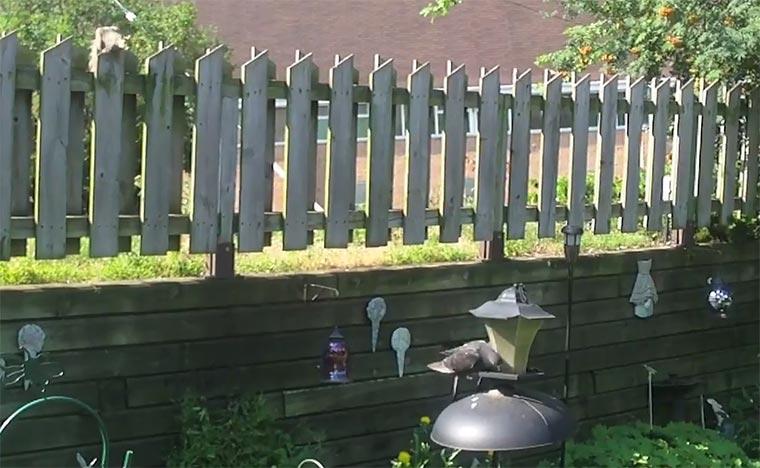 Eichhörnchen verscheucht Vögel