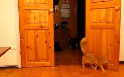 cat_scared_mario_sound
