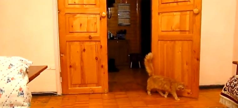 Katze erschrickt bei Super Mario-Sprungton