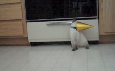 cat_stuck_in_party_hat