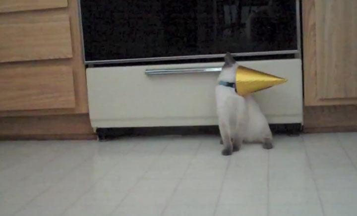 Katze steckt mit Kopf im Partyhut fest