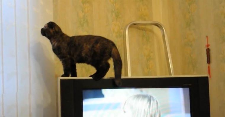Katzen-Magie: der Verwandlungstrick