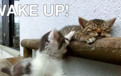 cat_wakes_up_cat