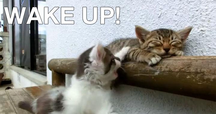 Wake up, buddy – Katze will Katze wecken