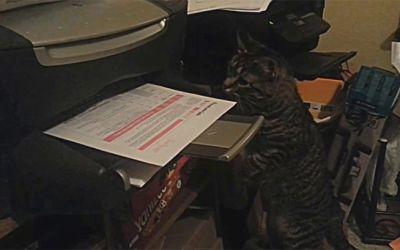 catprinter
