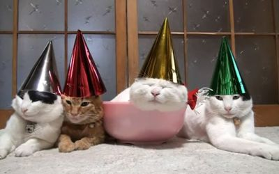cats_with_hats