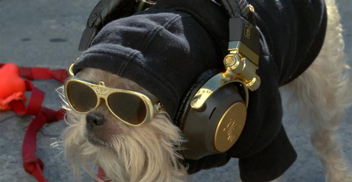 cute_dogs_listening