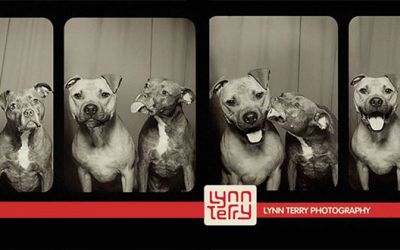 dog_photobooth_01