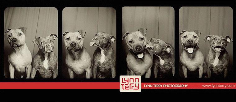 Hunde im Foto-Automaten