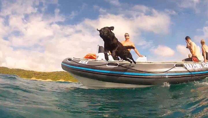 Wohlfühlfaktor 10: Hund schwimmt mit Delphinen